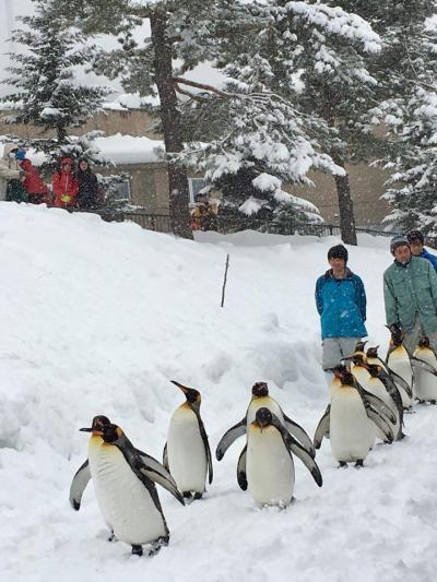 さっぽろ雪まつりと北海道7つの冬物語② 旭山動物園~旭川冬まつり~層雲峡氷瀑まつり