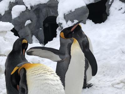 真冬の北海道 6 ペンギンと旭川ラーメン!氷点下の露天風呂は金縛りで磔の刑? 怒髪天を突く露天風呂で凍死?