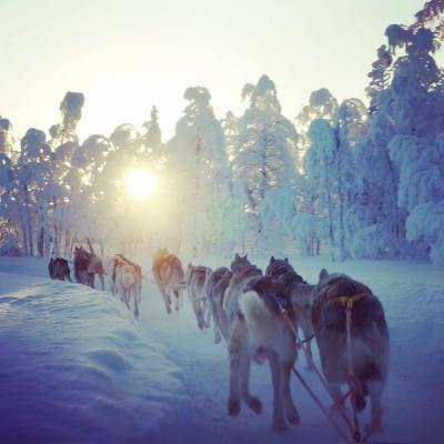 3度目のフィンランド #12  レヴィ③  ゲレンデ散策、ハスキーライド