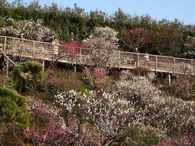 池上梅園と池上本門寺の桜2018