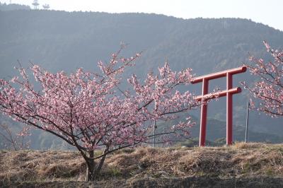 八千代 桜まつり 出かける