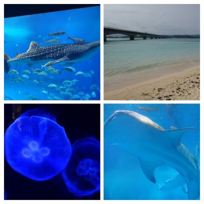 2018マイルで沖縄 日帰りバスツアーで美ら海水族館と古宇利島へ