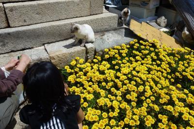 香川 猫旅行2