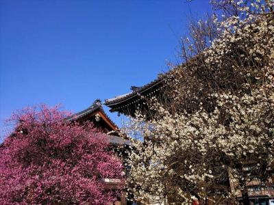 京の冬の旅でもないが、離宮二条城と島原・本願寺