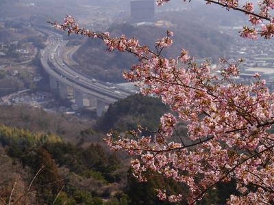 春を求めて・・・松田の河津桜と熱海の梅園、そしてのんびり熱海温泉を楽しんで来ました♪♪