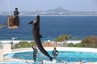 1泊2日で沖縄へ ~ホエールウォッチングと海洋博記念公園
