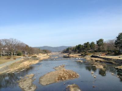 ちょっと早い梅花を!植物園、加茂川、白川を!
