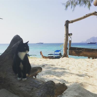 【2018.2】のんびりぶらぶら夫婦旅 クラビ&ピピ島 番外編(ピピ島猫歩き編)