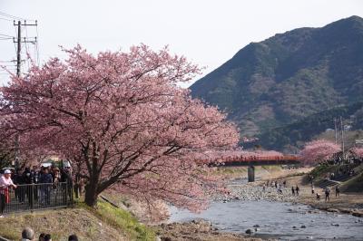 河津桜 すごい人出の中散策