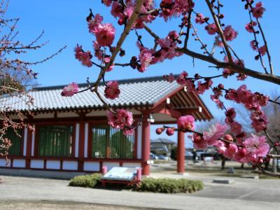 【駅からハイキング】梅花はなやかな下野薬師寺と道の駅しもつけ