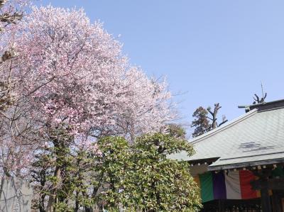 安行 興禅院と花と緑の振興センターの梅☆2018/03/03