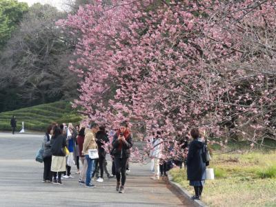 久しぶりに早春の花を求めて東御苑を訪問する②野草の島~富士見櫓~富士見多聞~桜の島迄