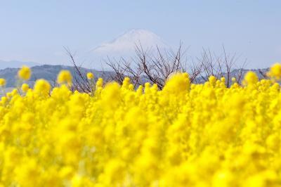 春がたくさん詰まった吾妻山公園へ行くの巻