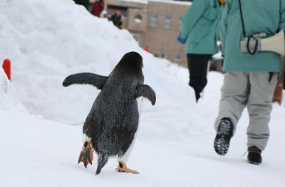 ペンギンのお散歩を見たくて旭川へ1泊の予定が飛行機欠航で2泊になった~!