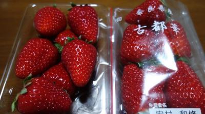 柿はもちろん苺も美味しい法隆寺から聖徳太子の足跡を巡り上ノ太子まで