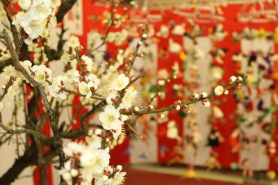 雛祭りの日 稲沢梅まつり♪ 梅の咲き具合はどうかな。