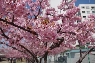 川の上に駅のホームがある、東大島駅から河津桜を見に行ってきた。