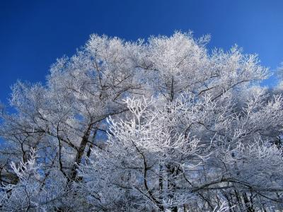 入笠山で雪山を楽しむ
