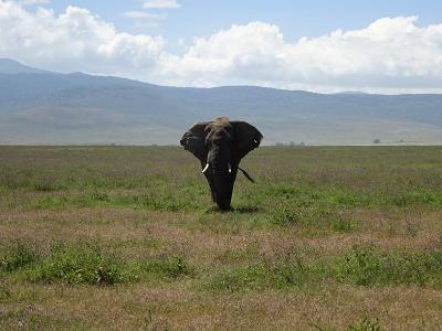 ンゴロンゴロ自然保護区(タンザニア) 2018.6.10