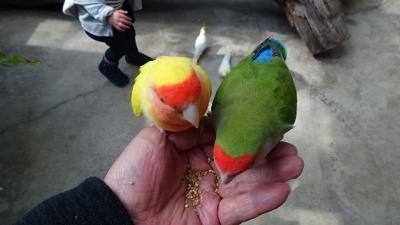 神戸どうぶつ王国でプチオフ会(3) コンタクトパロッツで鳥さんの餌付け。