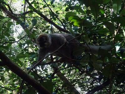 アツィナナナの熱帯雨林(ラヌマファナ国立公園:マダガスカル8) 2018.7.3