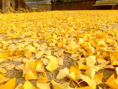 黄色い絨毯 紀州加茂神社