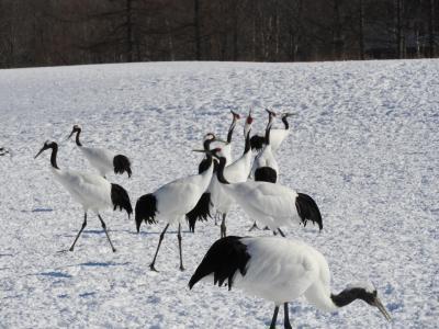 北海道冬のいいとこ満喫3日間。