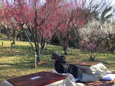 大阪 多国籍グルメ⑦ コタツでヌクヌク梅の花見♪。大阪3大梅見めぐり&インド料理