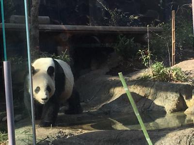ジャイアントパンダに会いたい!はじめましてリーリー君