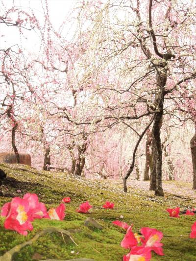2018年3月 京都に春が来てます(梅)④ 城南宮がすごかったver 後編