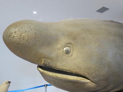 ハイサイ沖縄! ヤンバルクイナとクジラとジンベイザメに出会う旅 withゴエモン Part3