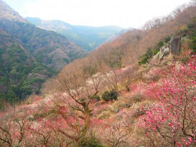 梅の宴最終日 幕山と南郷山ハイキング