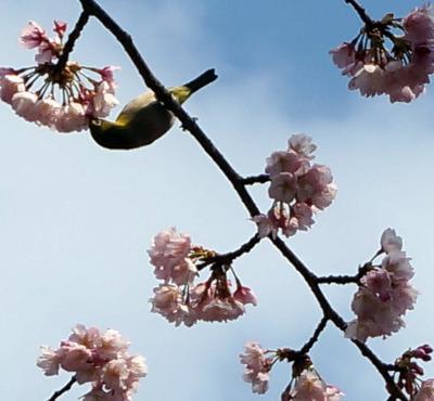 弥生3月 上野の杜で春を満喫。
