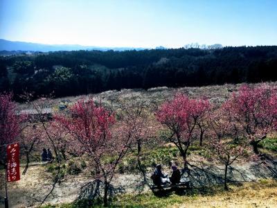 1泊2日の群馬旅行 初日は水沢、箕郷梅林、猿ヶ京温泉