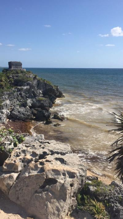 【カンクン発】ビーチが海藻の被害を甚大に受けている件 By ウォータースポーツカンクン店長吉田