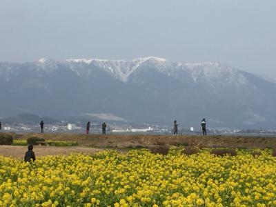 関西④3日目 琵琶湖マリオットの朝食ビュッフェ 葉の花と雪山