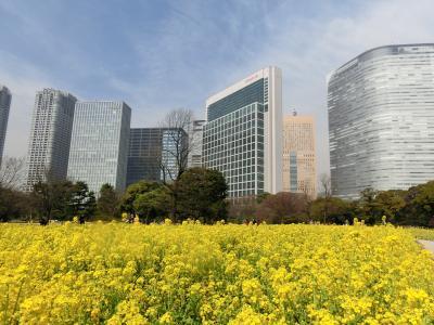 ~春を感じにぶらり東京都公園へ~浜離宮・小石川…