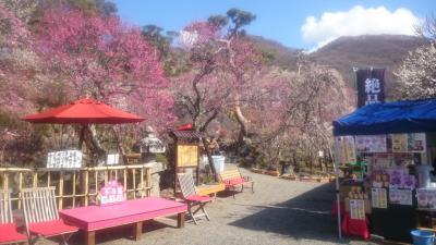 山梨県 自然と歴史にあふれた甲府観光と湯村温泉 (4-4) 不老園の梅と深川江戸資料館