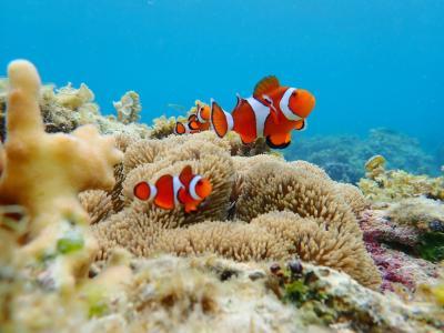 Bohol island パングラオ 1人旅¨̮♡︎海遊び編3-5日目