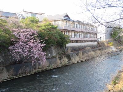初めての伊東温泉への旅③松川遊歩道を散策する