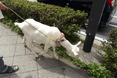 戸塚駅前に山羊
