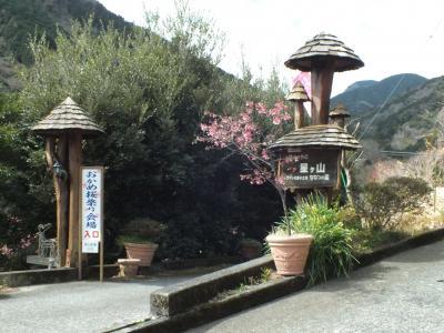 一夜城(史跡石垣山)とおかめ桜