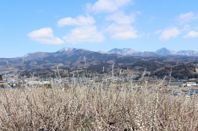 群馬・榛名梅林の再訪と、雪解け間近の嬬恋村・つまごいパノラマラインへ