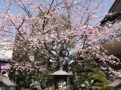 密蔵院の安行桜☆旬味そば 名倉☆2018/03/14