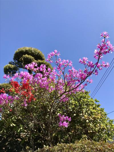 春を迎えに九州~福岡・鹿児島