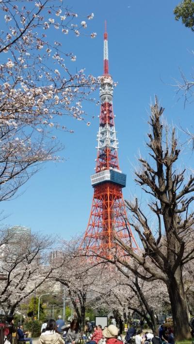 都内桜名所&お花見クルーズ 良いとこどり欲ばり10景めぐり