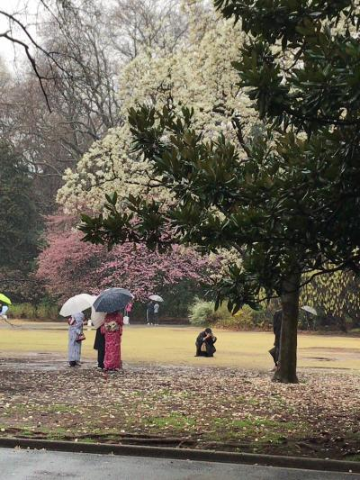 2018年桜最前線!?雪降る丸ノ内線池袋発荻窪行各駅停車で花見ツアー