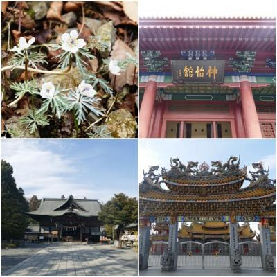 埼玉県秩父郡小鹿野町へ「神怡館」と「秩父神社」、「節分草」を見学に出かける