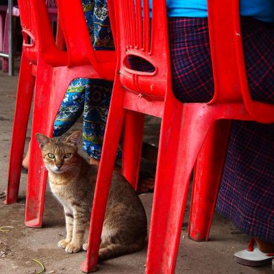 黄金色に輝くパゴダとミャンマービールを楽しむ新春旅 in Yangon★2018 03 4-6日目 【RGN⇒HK⇒名古屋】