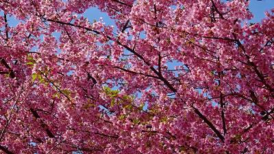 伊丹市散策 花を探しての街歩き 上巻。